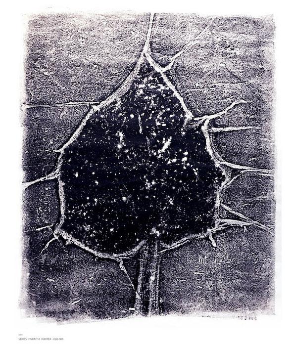 single leaf on grey